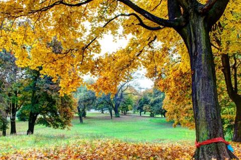 Autumn in Żary Poland