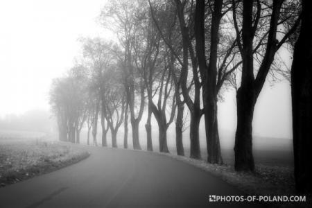 Mgła Polska