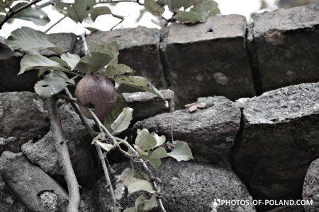 Złotnik Polska lubuskie