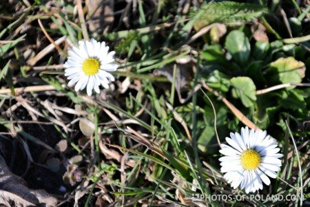 <br /> spring flowers