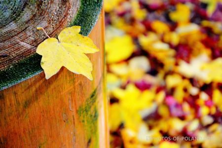 Arboretum w Rogowie jesienią
