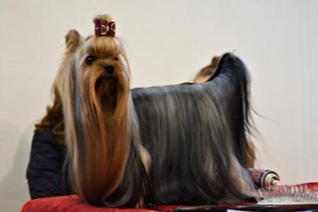 Wystawa psów w Drzonkowie